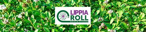 tappeto erboso pre-coltivato LippiaRoll